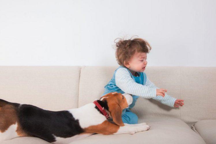 泣いている赤ちゃんと犬
