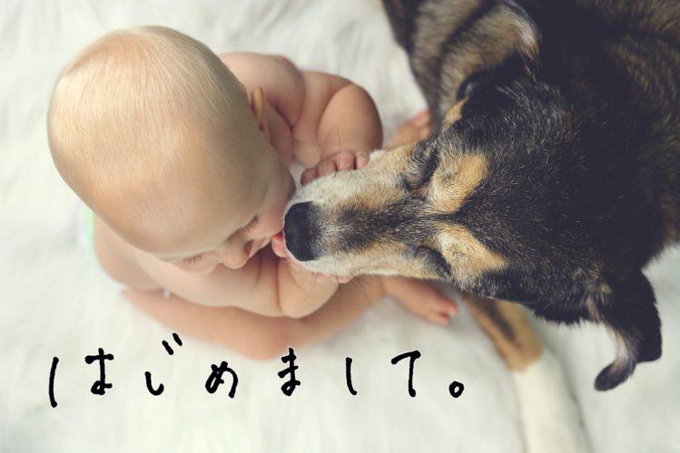 あかちゃんの顔を舐めている犬