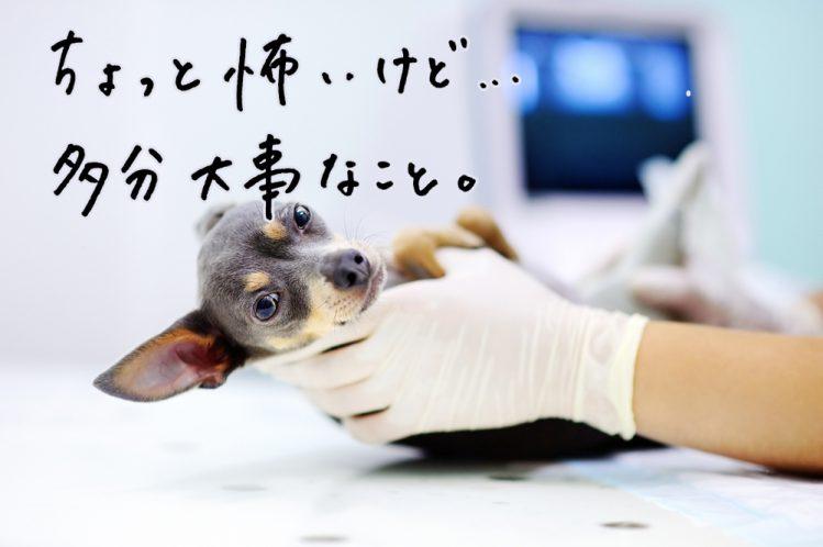 【アンケート】愛犬は動物病院を怖がる?怖がらない?