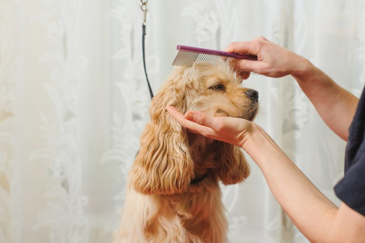 【専門家が解説】「犬のトリミング基礎知識」頻度や必要性は?