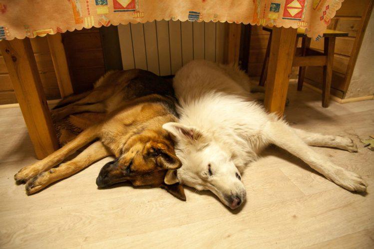 で 犬 寝る 横向き 寝たきりの犬の寝方や寝る環境。