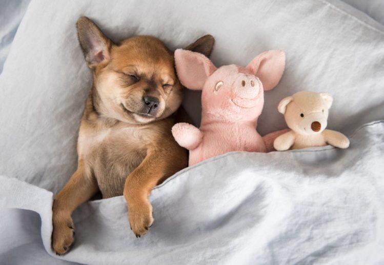 犬の寝相には意味がある 寝相から見る性格診断 心理 Qpet キュー