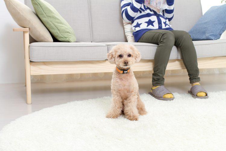 愛犬のためのDIY(手作り)教室~ペットステップ・階段~
