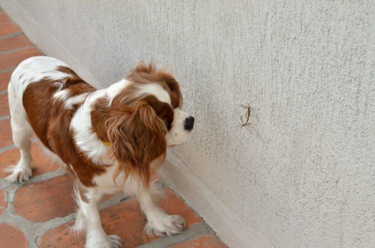 愛犬のためのDIY(手作り)教室~人も犬も使える虫除け~