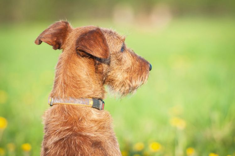 犬が迷子になった時はどうやって探せばいいの?
