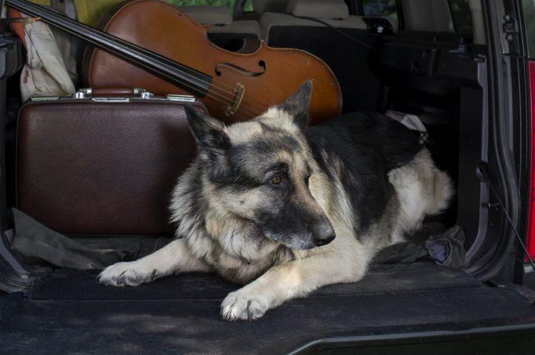 愛犬と動物病院に行くときに役立つ持ち物リスト