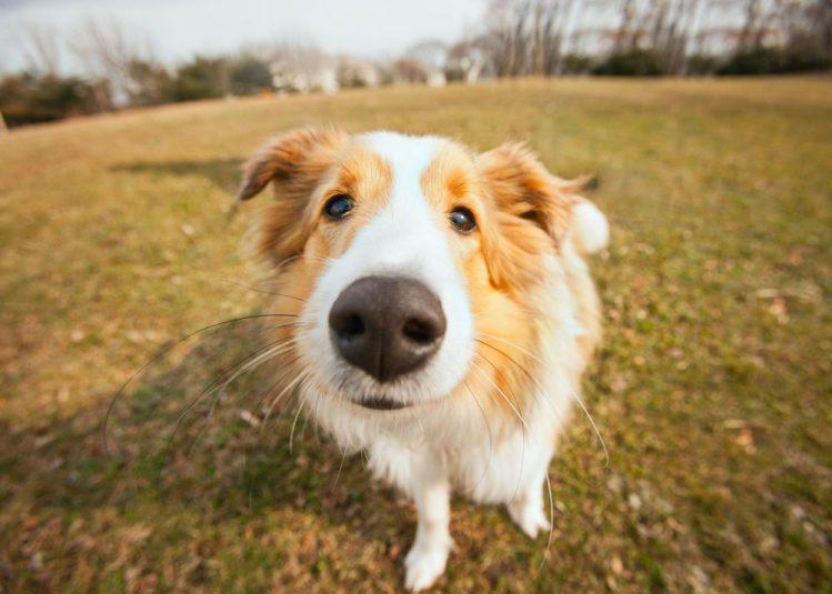 犬の臭い気になる一位は? 愛犬の臭い対策について