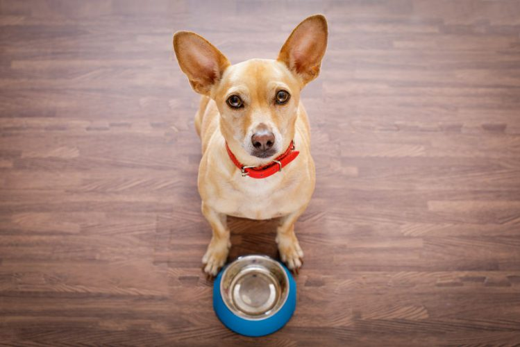 犬が空っぽの食器の前でお座りをしている様子