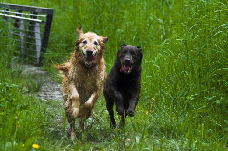【短距離走】走るのが速い犬種ランキング