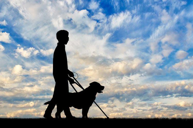 どうして盲導犬はラブラドール・レトリーバーが多いの?