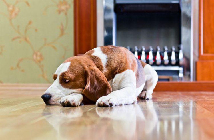 犬はストーブに近づきすぎる!飼い主が気を付けるべき3つのポイント