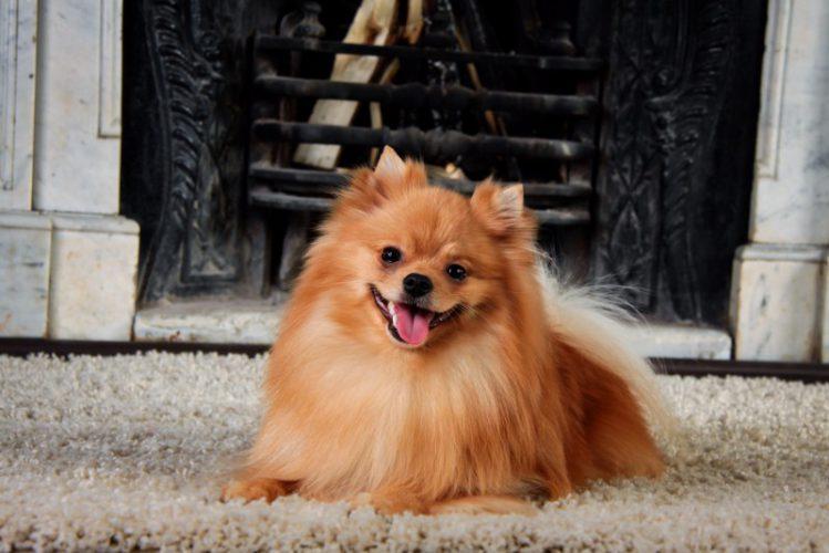 「デザイン・機能で選ぶ」犬用インテリア4選
