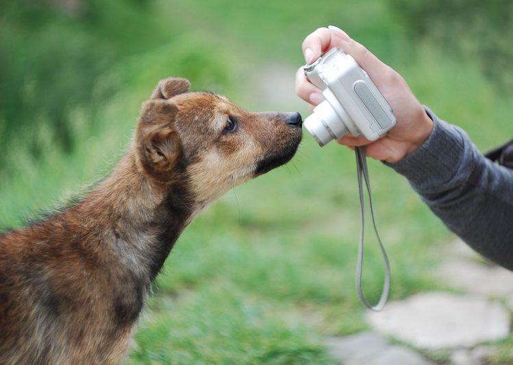 愛犬の写真でオリジナルTシャツを簡単につくれるサービス3選