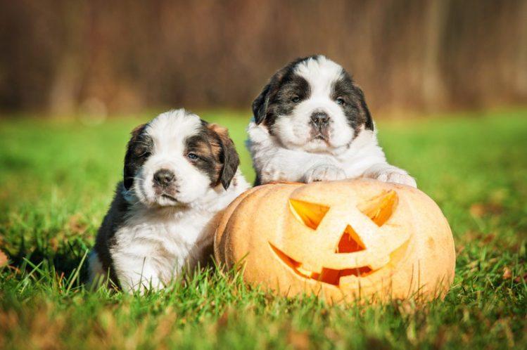 【2017年版】【関東】愛犬とハロウィンを楽しめるイベントをご紹介