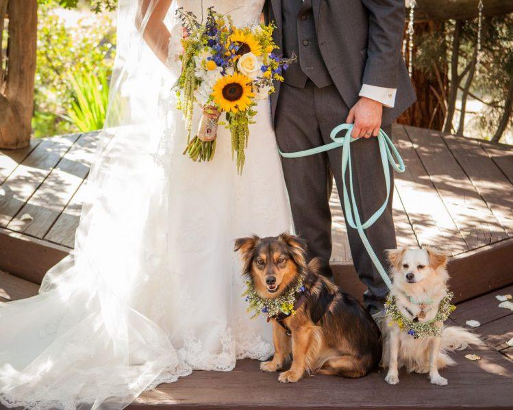 犬と一緒に結婚式が出来る式場5選