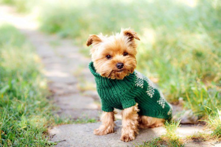 犬用の服の型紙が無料でダウンロードできるサイト5選