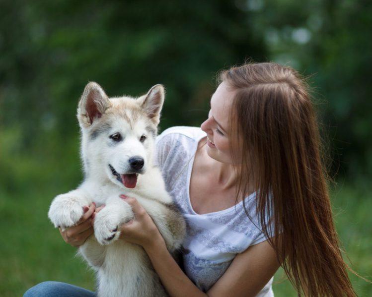 【東京】犬の譲渡会に関する情報まとめ