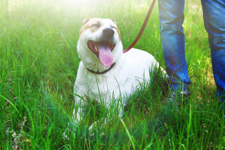 【神奈川】犬の譲渡会に関する情報まとめ