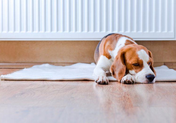 【愛犬の寒さ対策:実践編】具体的に何をしてあげればいいの?