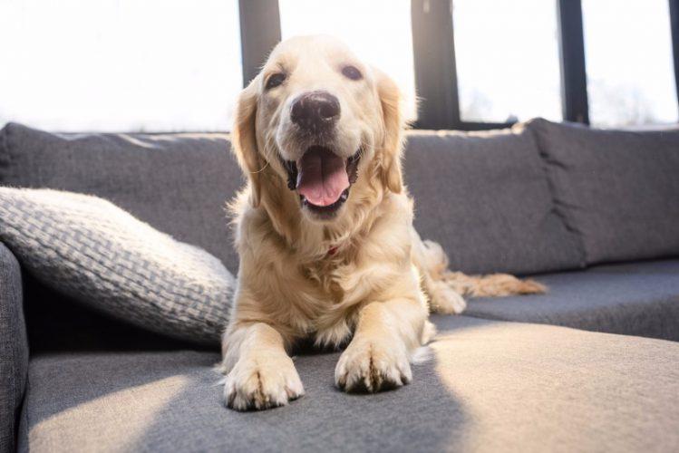 一人暮らしで犬を飼うのが難しい理由について