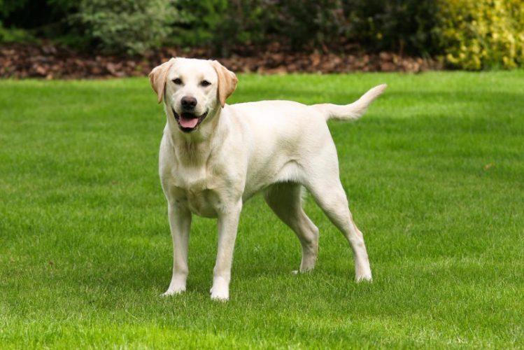 日本人の死亡原因1位のがんを発見する「がん探知犬」とは?