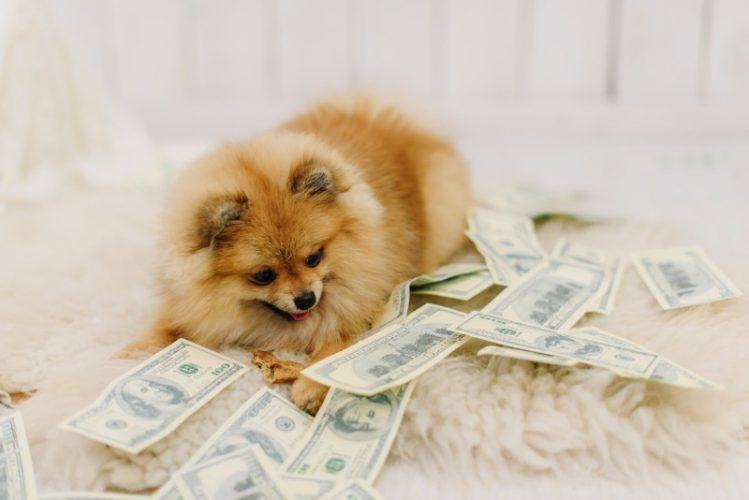 世界で高価な犬種トップ3をご紹介!