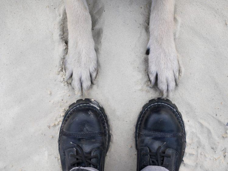 男性のつま先と犬の前足