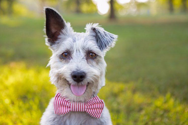 犬が片耳を立ててこちらを見ている様子