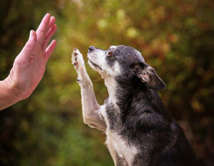 老犬が飼い主と手を合わせようとしている様子