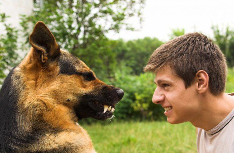 犬がいじける理由は?仕草や対処法をご紹介!