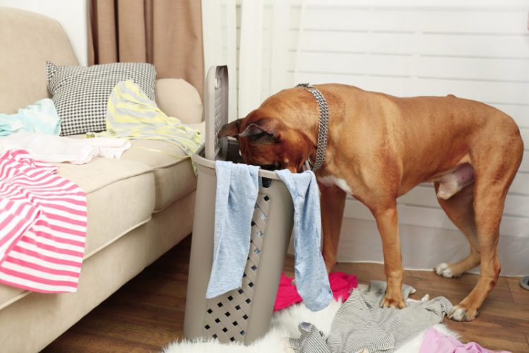 犬がイタズラする理由と対処法について