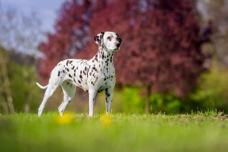 一覧 犬 種類