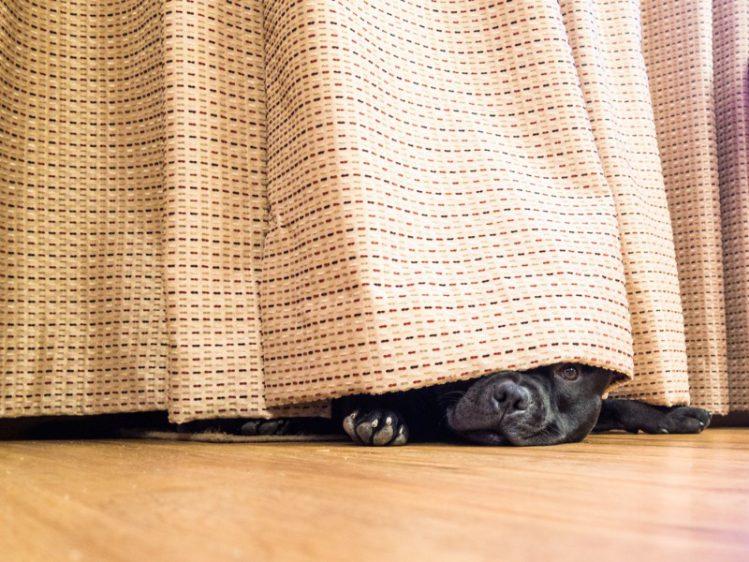 犬がカーテンをかぶる理由や対策法