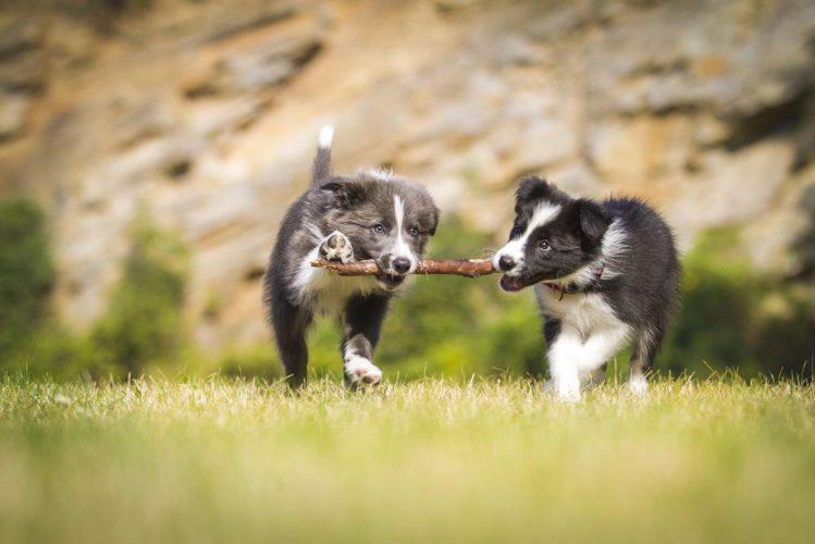 パピーパーティーで犬同士の触れ合いを!