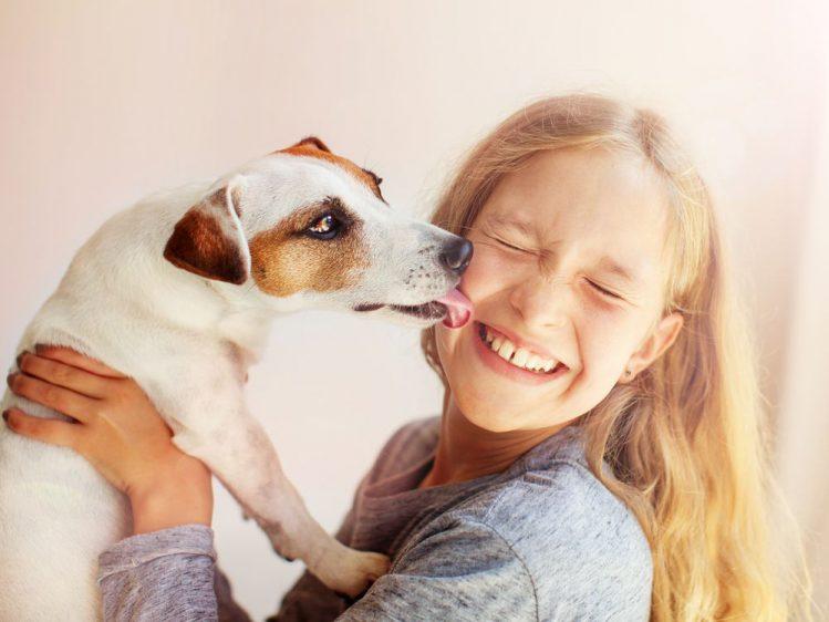 女性の顔を舐めるジャックラッセルテリア