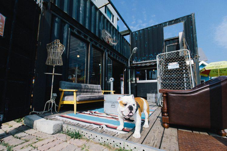 【愛犬と湘南の海へ】全国の犬好きが集まるアットホームな人気店「カフェ&バー江の島77」―[神奈川県藤沢市]