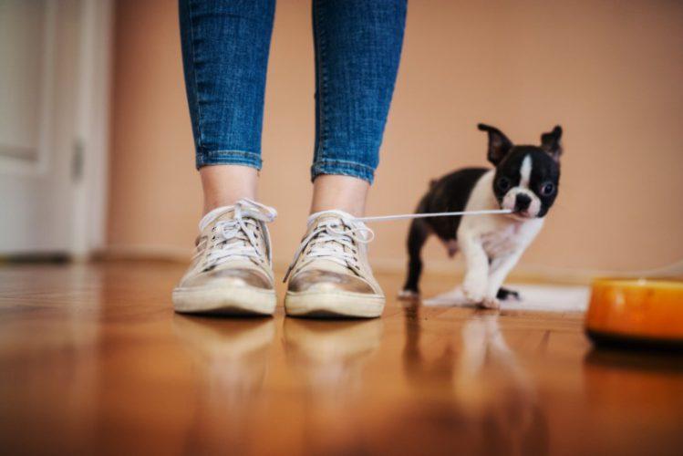 【獣医師監修】もしかして病気? 犬が足を引きずる理由