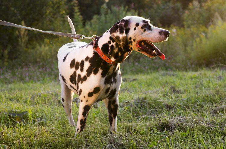 犬同士の初対面時に注意すべきこと