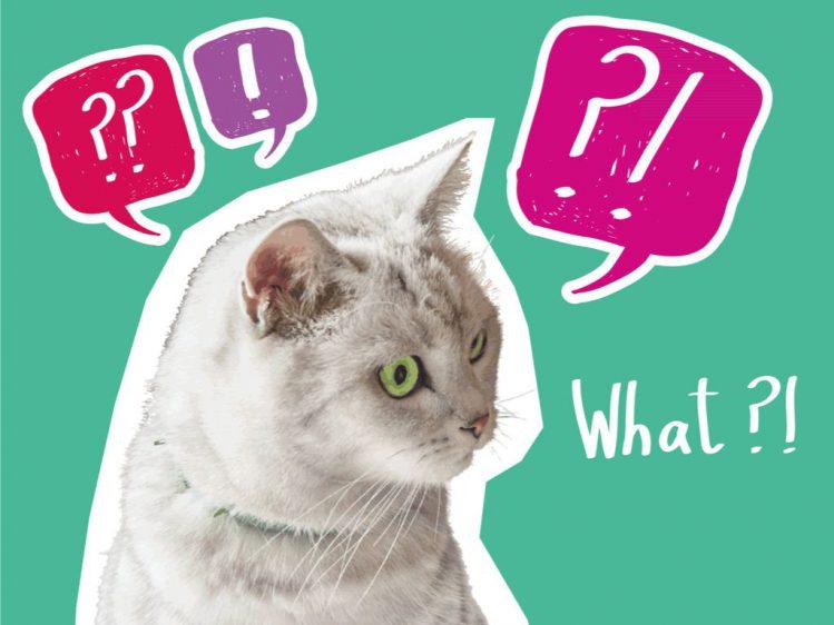 【行政書士が解説】Q.「マンションの『ペットクラブ』をちゃんと機能させるには?」