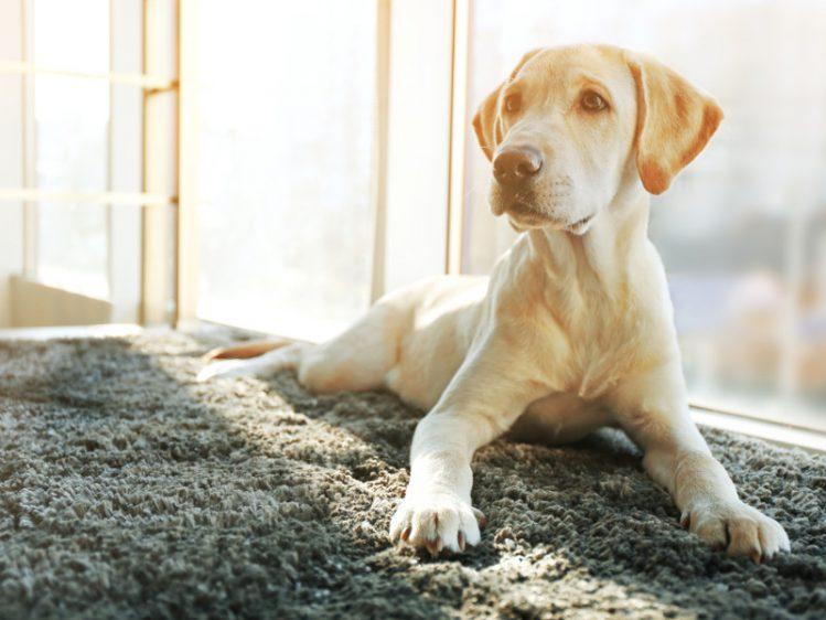 これで納得 愛犬があごを乗せてくる5つの理由とは Qpet キューペット