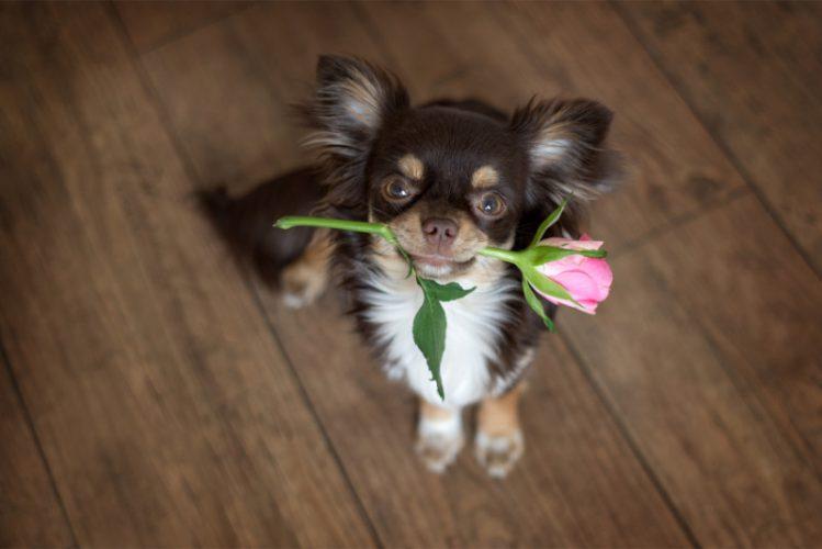 犬が飼い主に見せる6つの愛情表現