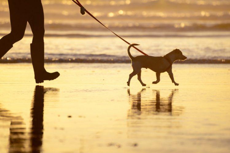 男性とその愛犬が海辺を散歩している様子