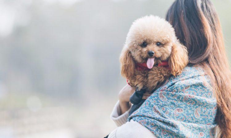 初心者でも飼いやすい犬種4選