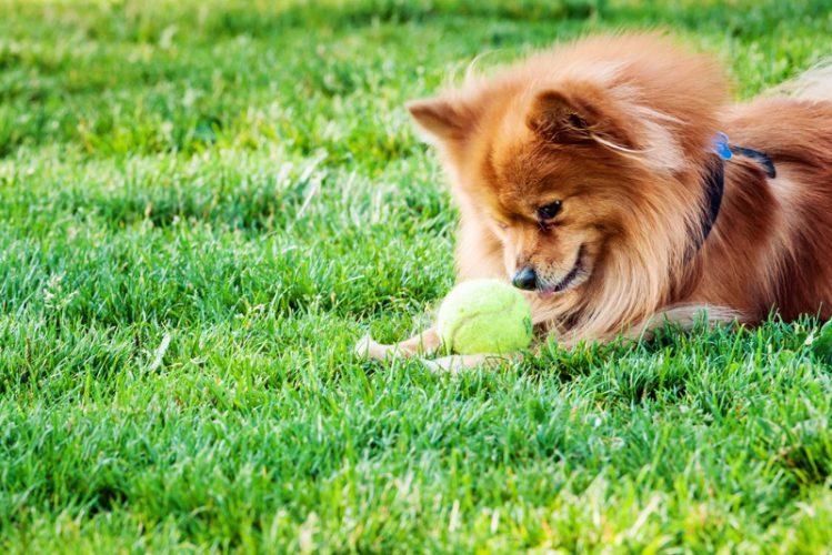 犬の毛の抜けやすさに違いはあるの?