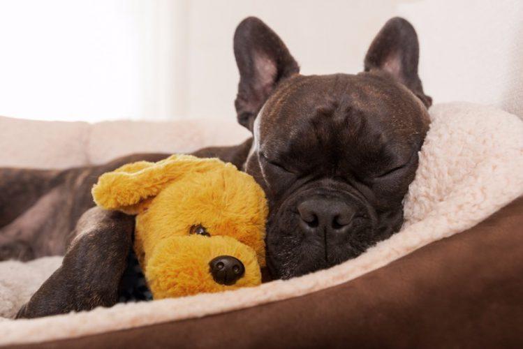 犬は飼い主と一緒のベッドで寝たがる?その理由と注意点