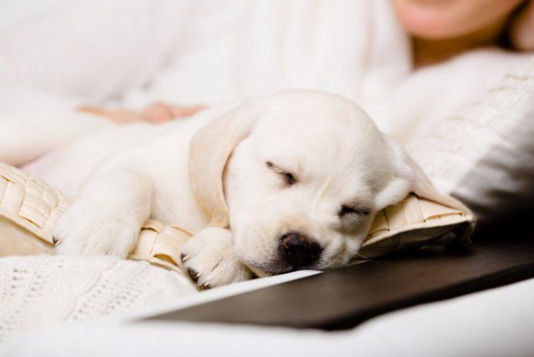 犬はソファが大好き!遊ぶときに注意すべきポイントとは?