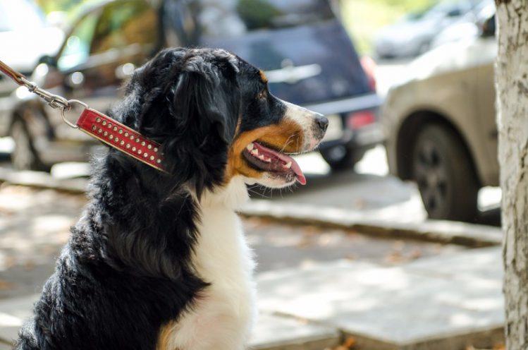 【弁護士が解説】犬が散歩中にしたフンにまつわるトラブルについて