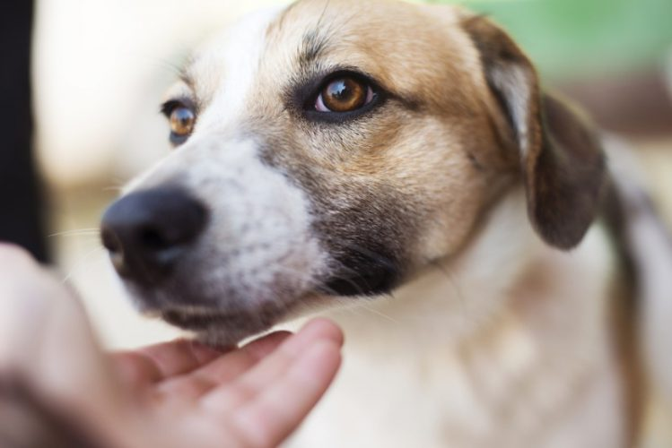 犬が飼い主を心配するときの4つの行動