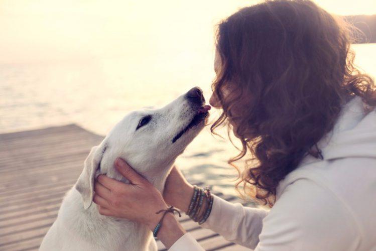 飼い主に顔を近づける犬