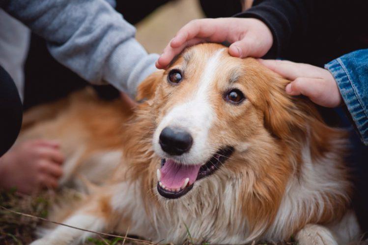 犬が飼い主に見せる愛情表現4選